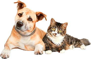Dog With Cat Png