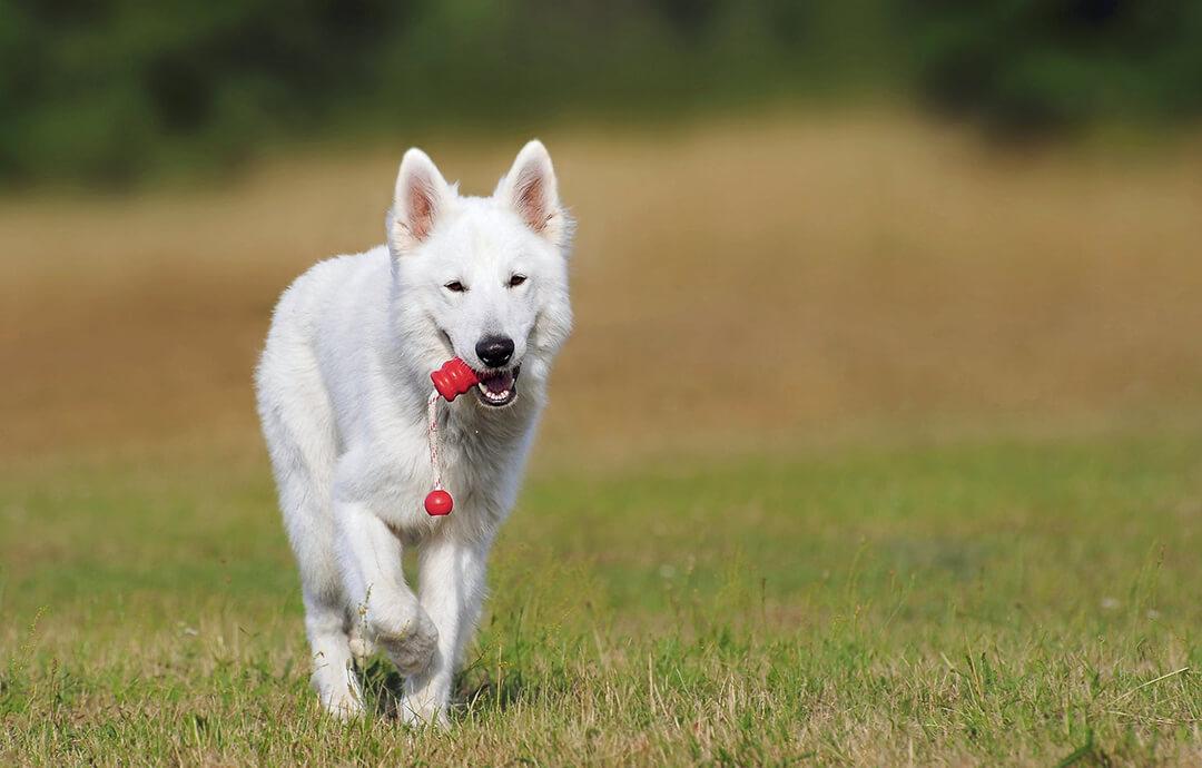 Dog Playing – PetsForever