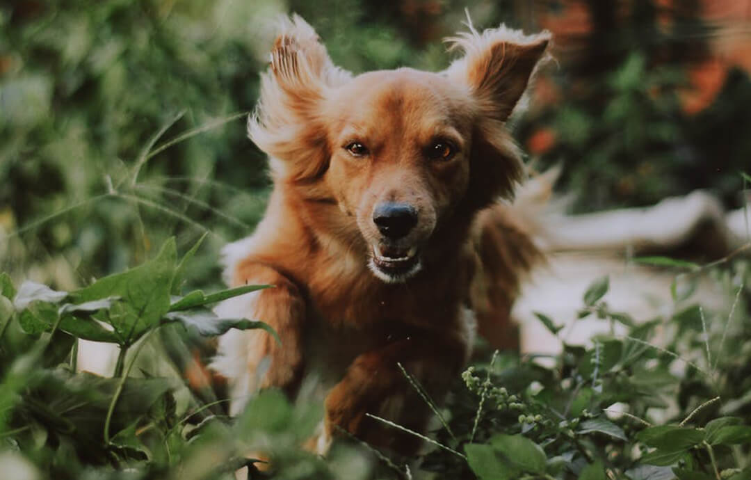 Dog Image – Pets Image Share – PetsForever