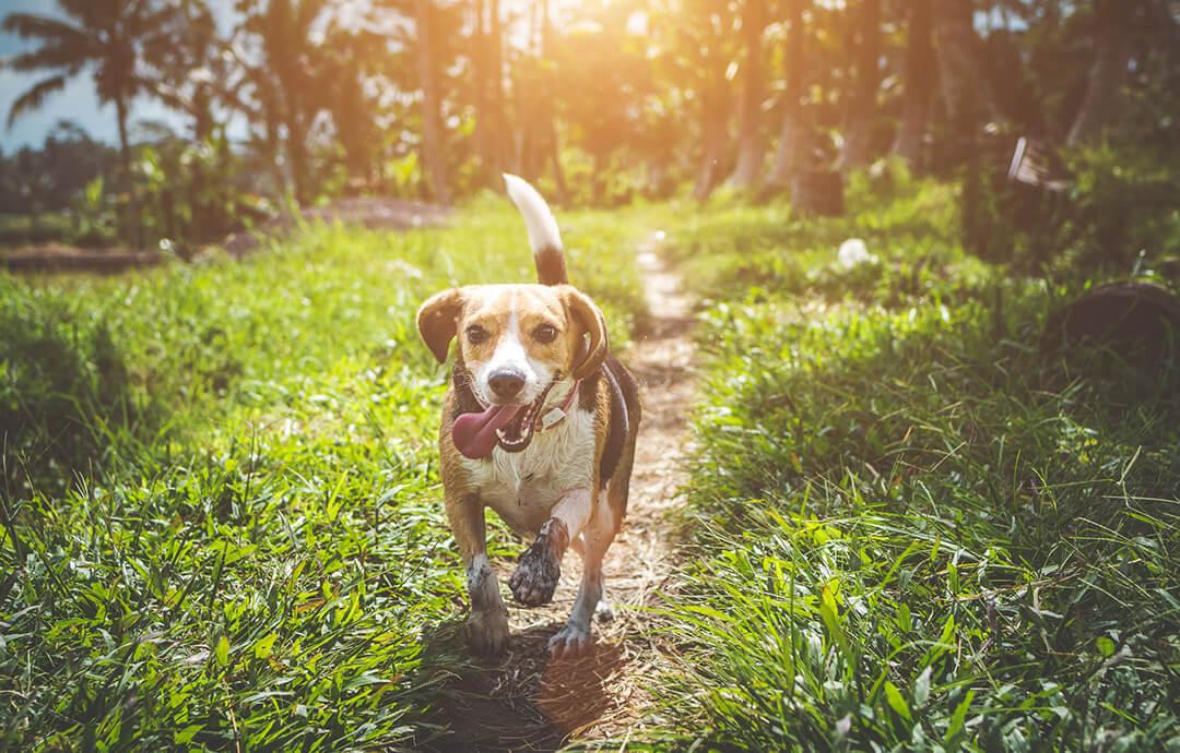 Running Dog – PetsForever