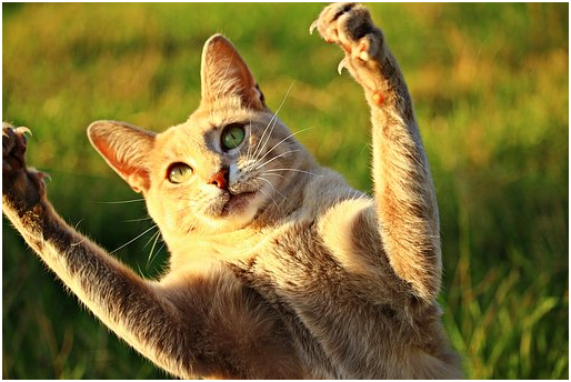 Reasons why we Should not Declaw Cats