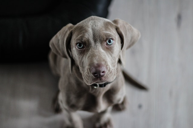 Dog Anxiety: What dog Owners Need to Know about an anxious dog