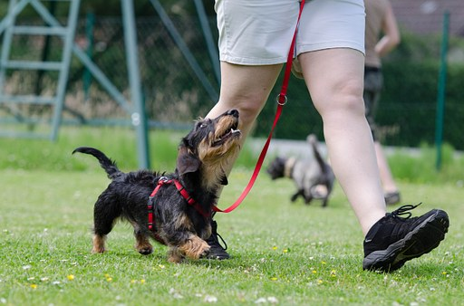 Top Tips for Finding the Best Pet Sitter