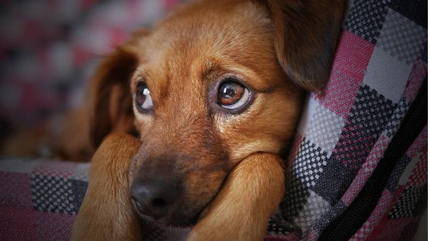 The benefits of pet social network apps to pet owners