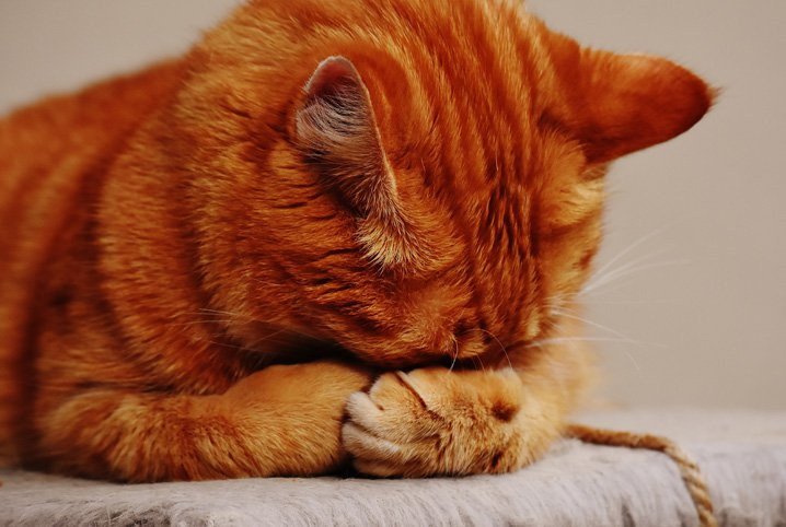 Your cat is crying: What can you do about it?