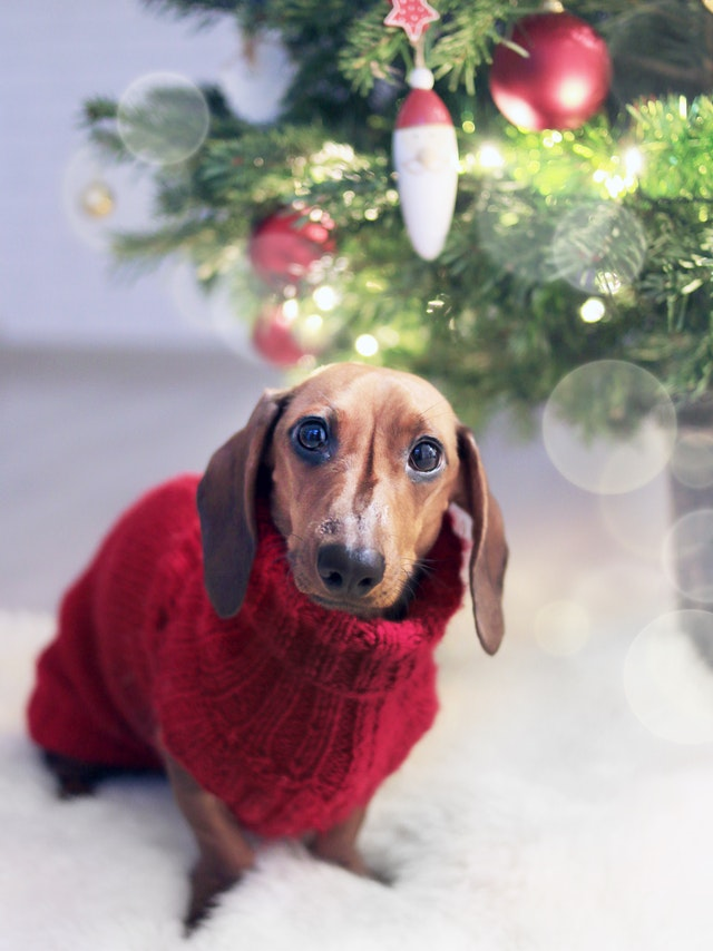 Holiday pet care tips for a jolly season