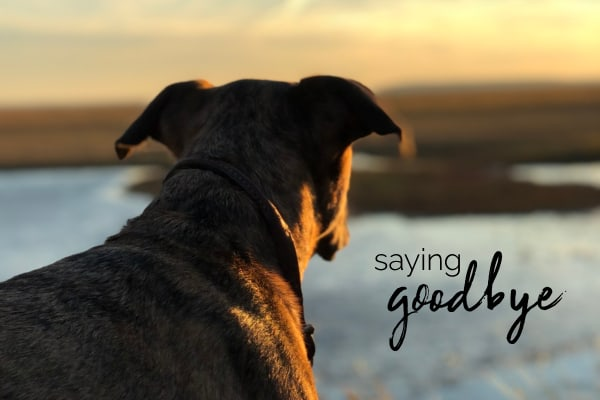 How do I know when it's Time to Say GoodBye to my pet?