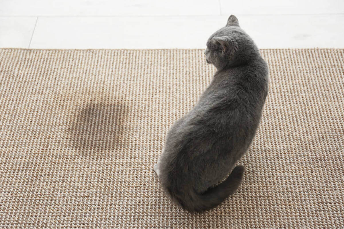 DOES-YOUR-CAT-OR-KITTEN-PEE-OUTSIDE-THE-LITTER-BOX