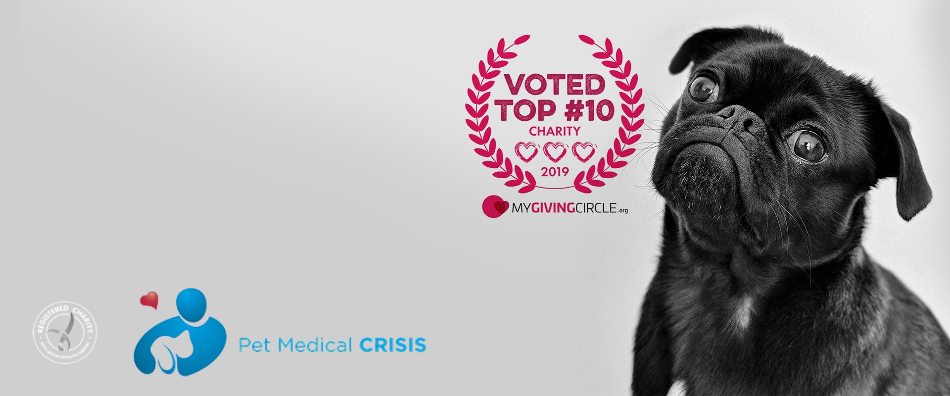 Pet Medical Crisis
