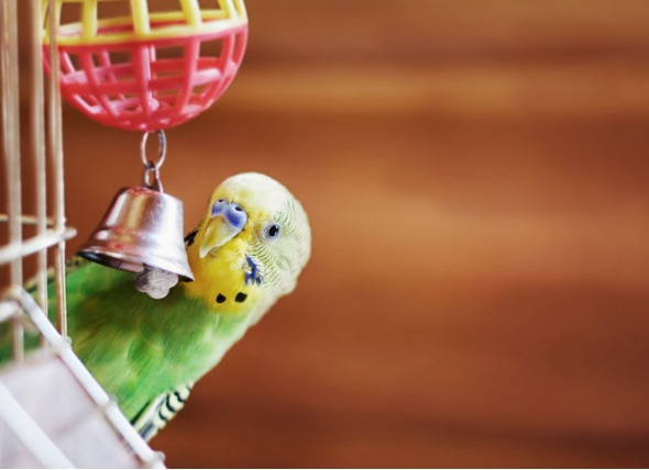 How to choose safe toys for pet birds?