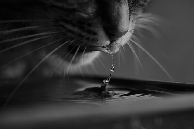How can I encourage my cat to drink more water?