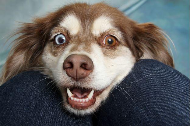 Dog Teeth - Dog Dental Health and Hygiene