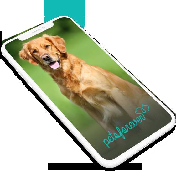 App View loading-screen-petsforever