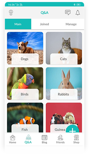Q&A app view with Animals Sections