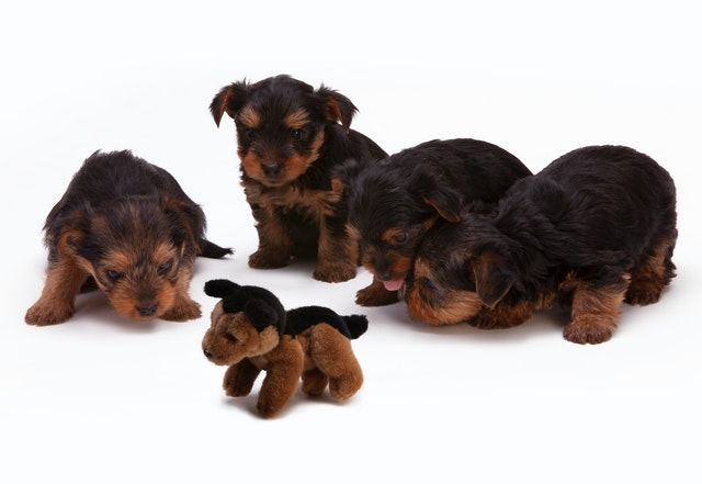 Why is puppy school important and how do I choose the right one?