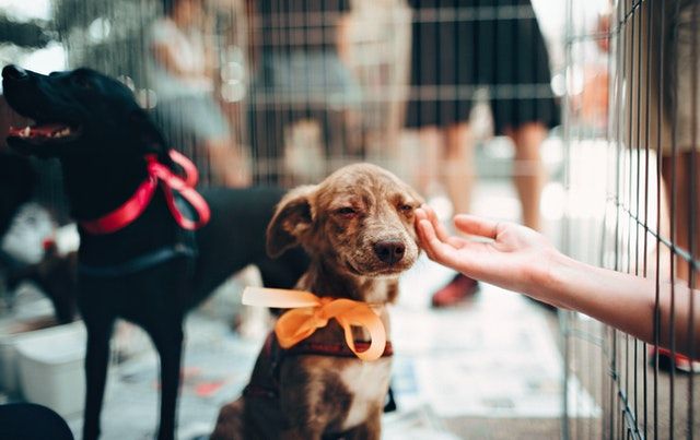 Tips for choosing a rescue dog