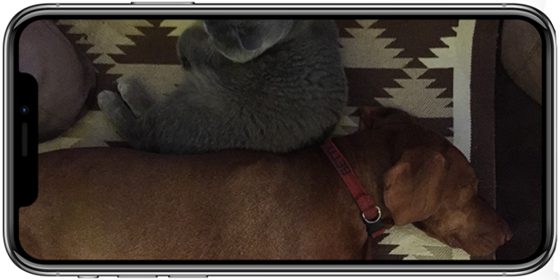 Dog & Cat Mobile View
