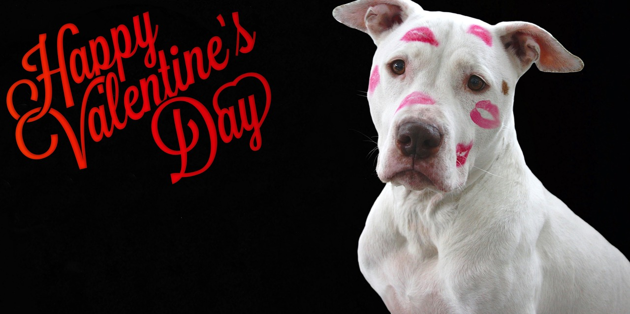 Show Your Pet You Love Them On Valentine's Day