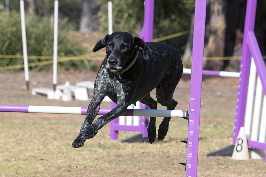How do you choose a good dog trainer