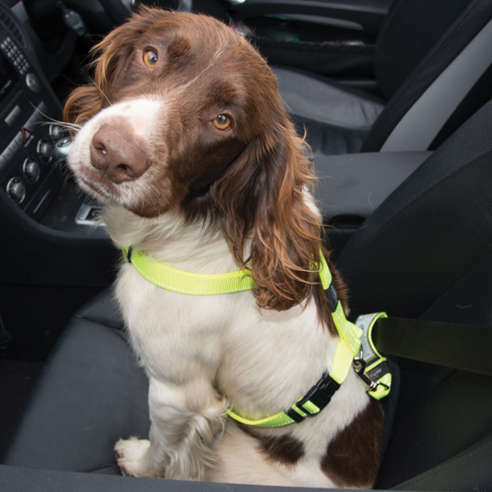 How can I restrain my pet in the car?