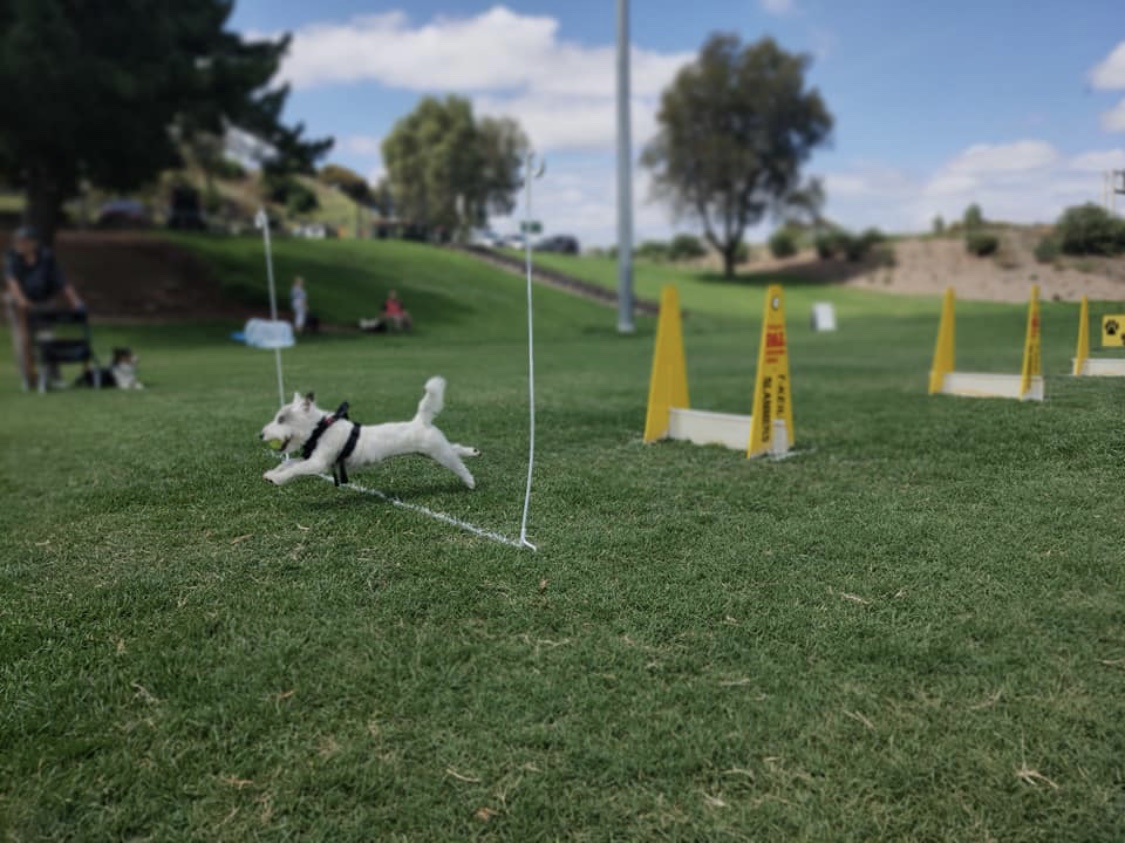 General questions about Flyball for dog obedience training