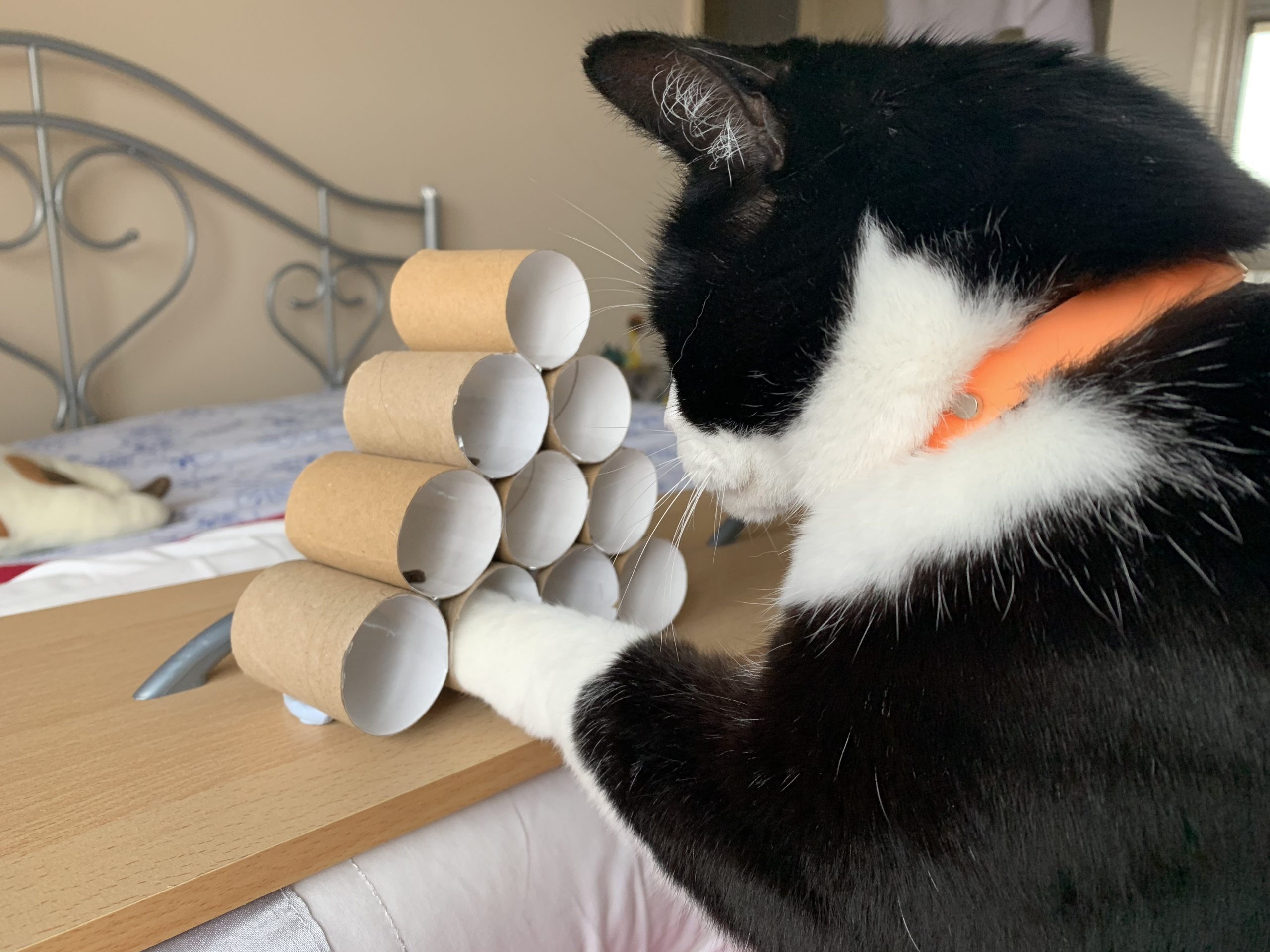 How can I make meal times more interesting for my cat?