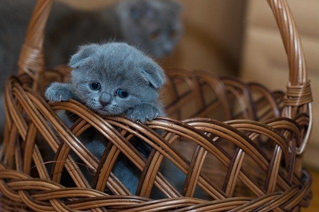 Do I need to register my cat in Australia?