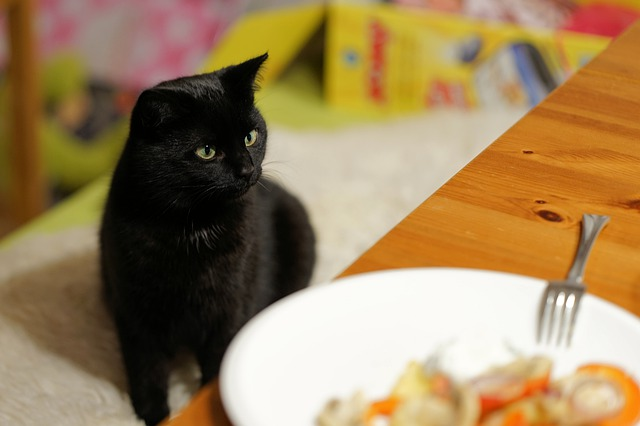 What human foods can I feed my cat?