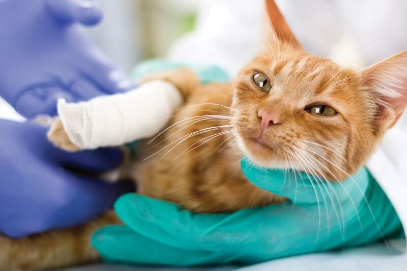 Everything all Pet Owners Should Know About a Pet Emergency
