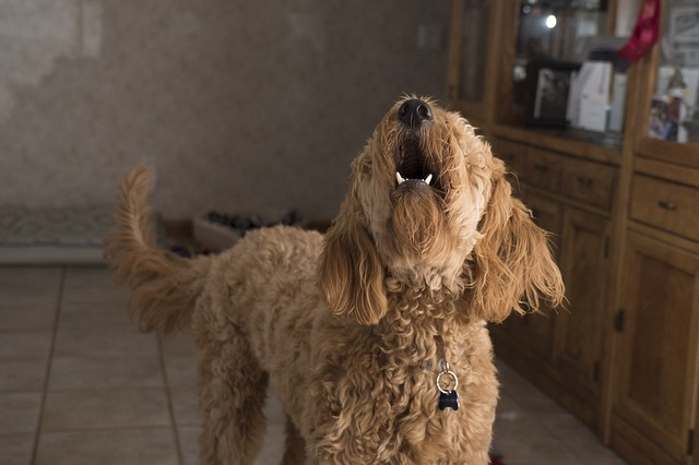 My dog keeps barking. What should I do to make him stop?