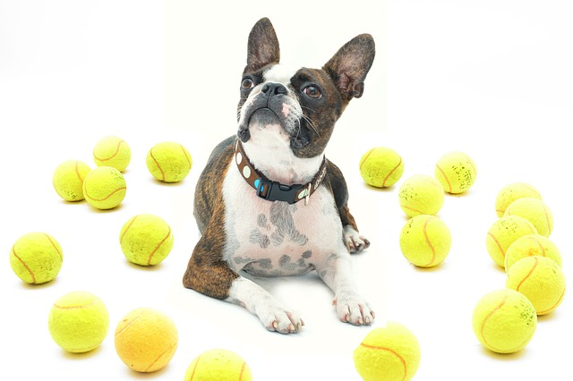 I've heard that tennis balls are bad for my dog, is this true?