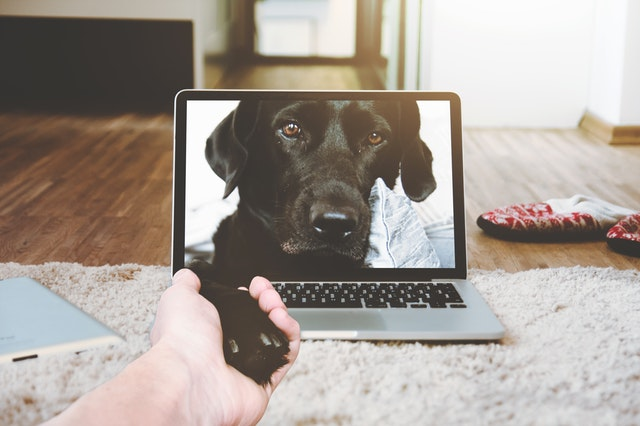 Biggest Tech Trends in the Pet industry to watch for