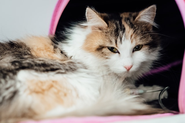 How often should I be taking my cat to the vet for a general health check-up?