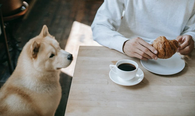 What food are toxic to dogs?