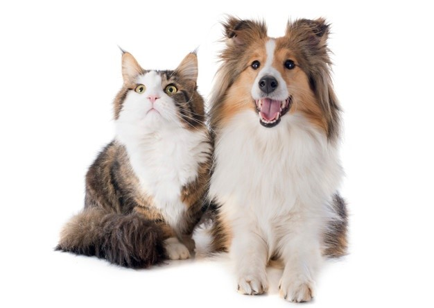Top Pet Trends for 2021 All Pet Parents Should Know About