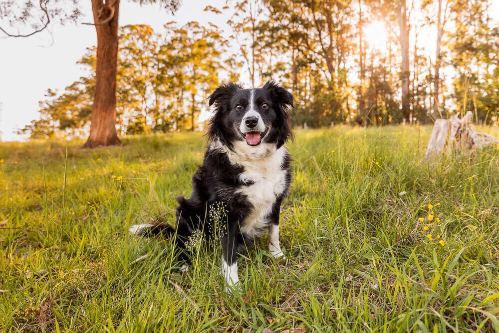 What do I need to carry in my pet photographer's camera bag?