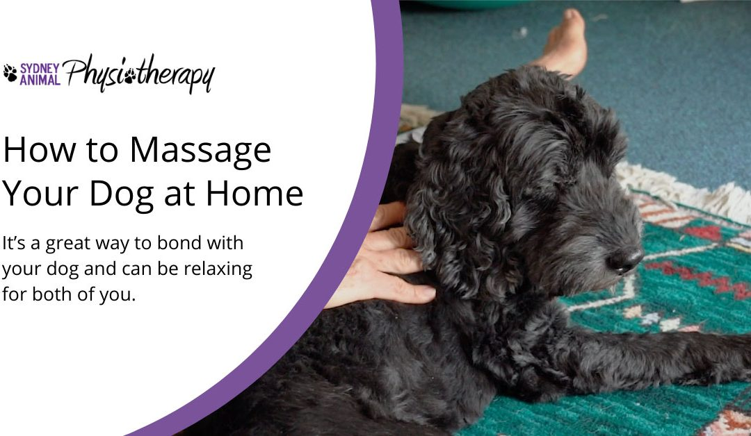Can I massage my dog at home?