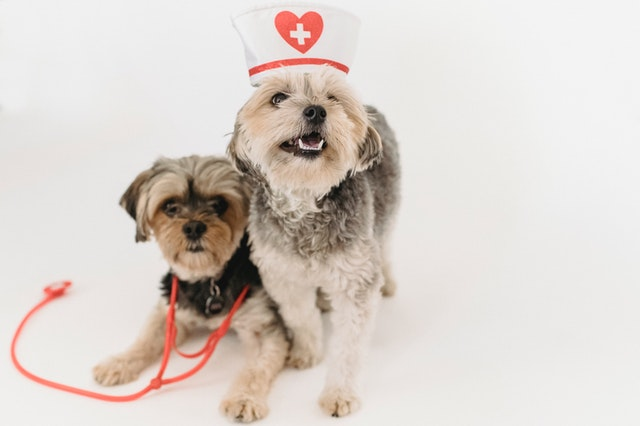 Pet Care Tips You Wish You Knew About