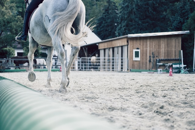 Do horses need shoes?