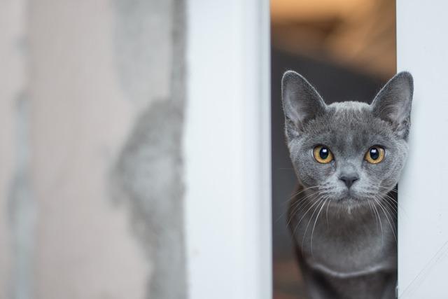 Do I need to worm my indoor cat?