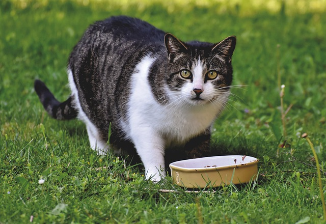 Why is my cat obsessed with food?